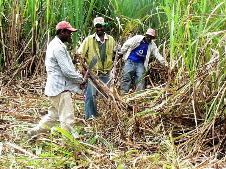 the sugary slave industry in barbados and jamaica A short history of slavery and sugar cane in jamaica jamaica has a vivid and painful history the sugar industry is the oldest continually operating industry in jamaica, generating the third largest foreign exchange (after tourism and bauxite.